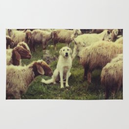 Herding dog, male, south of Israel, scaned sx-70 Polaroid Rug