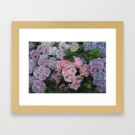 Purple Hydrangea Flowers Framed Art Print