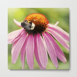 Bee Love Metal Print