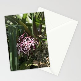 Tropical Spider Orchid Stationery Cards