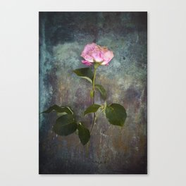Single Wilted Rose Canvas Print