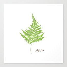 Lady Fern Illustration Botanical Print Canvas Print
