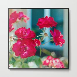The Tea Rose Metal Print