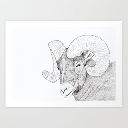 Bull.Sheep Art Print