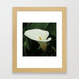 Calla Lilly Framed Art Print