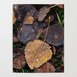 Autumn leafs with frozen water drops. Poster