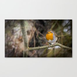 Robin on a Branch Canvas Print