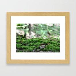 Forest Moss Framed Art Print