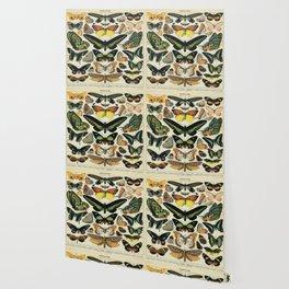 Adolphe Millot Butterfly Vintage Scientific Illustration Old Le Larousse pour tous llustration Wallpaper