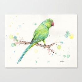Rose Ringed Parakeet Canvas Print