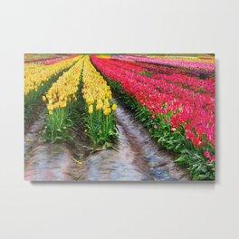 Muddy rows at tulip farm Metal Print