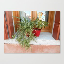 House Plants in Burano Canvas Print