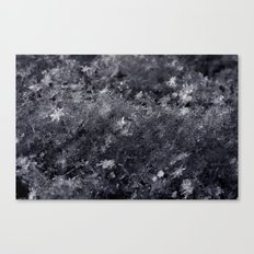 As the stars fell from the sky Canvas Print