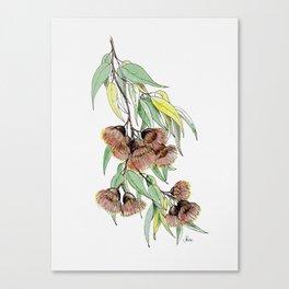 Flowering Red Gum Canvas Print