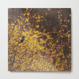 golden hour. Metal Print