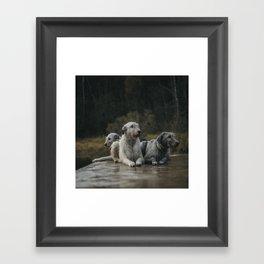 Irish Wolfhounds. Framed Art Print