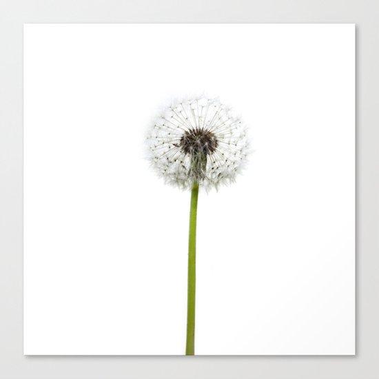 infinite wishes Canvas Print