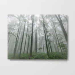 Smoky Mountain Summer Forest VII - National Park Nature Photography Metal Print