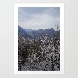 Snow and Blooms Art Print