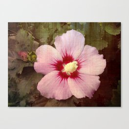 Pink Rose of Sharon Bloom Canvas Print
