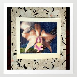 Not Your Usual Corsage Cattleya Art Print
