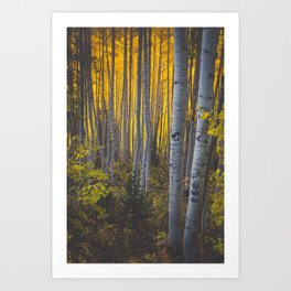 Duos of Aspens in a Yellow Colorado Autumn Forest Art Print