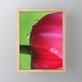 tulip flower  Framed Mini Art Print