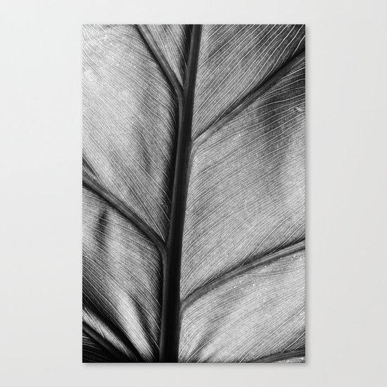 silver leaf Canvas Print