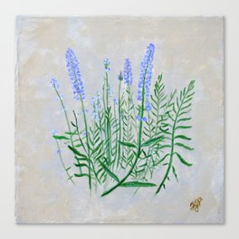 Lavender Plant Grows in the Garden Canvas Print
