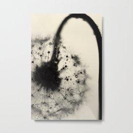 dandelion black Metal Print