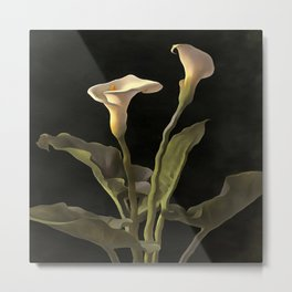 White Calla Lilies On A Black Background Metal Print