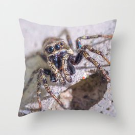 What's Shakin' Spidey? Macro Spider Photograph Throw Pillow