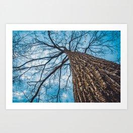 Earth Capillary. Nature Photography Art Print