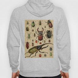 Popular History of Animals Beetles Vintage Scientific Illustration Educational Diagrams Hoody
