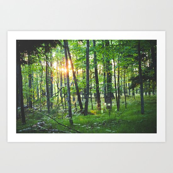 Spring Forest Art Print