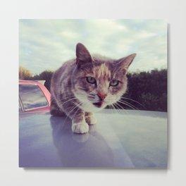 Unbridled cat Metal Print
