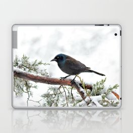 Snow Grackle Laptop & iPad Skin