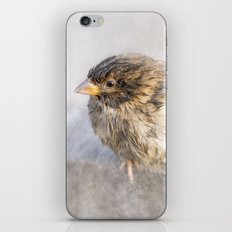 Sparrow - Faulty forecast iPhone & iPod Skin