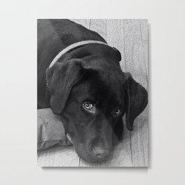 Puppy Portrait Textured Metal Print