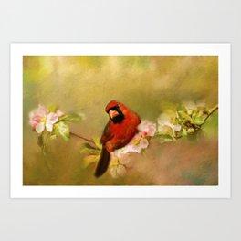 Cardinal of Spring Art Print