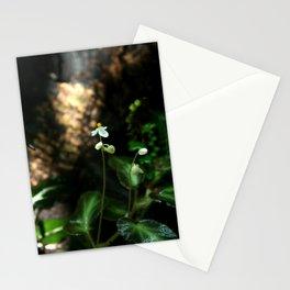 White Flower- Begonia Thelmae Stationery Cards