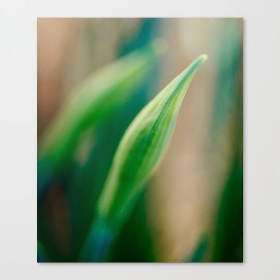 Delicate Canvas Print