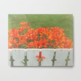 White Picket Fence / Daylilies / Flowers Metal Print