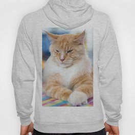 Red-white tabby Maine Coon cat Hoody