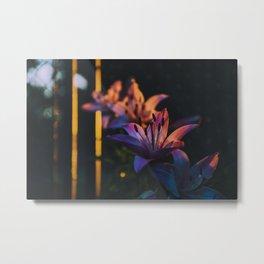 Golden hour flowers Metal Print