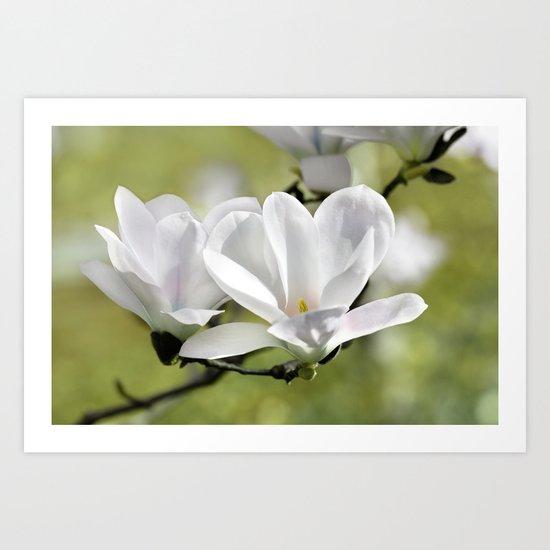 Magnolia 171 Art Print