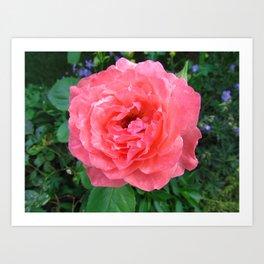 Rose 5 Art Print