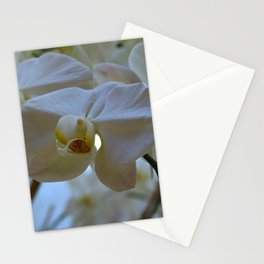 White Peabody Orchid III Stationery Cards