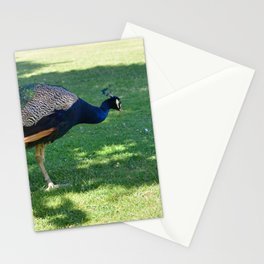 Peacock in the park Stationery Cards
