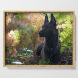 Belgian shepherd dog in the autumnal forest Serving Tray